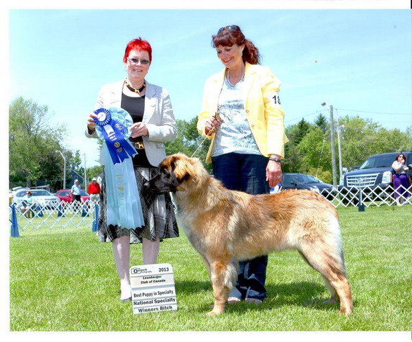 WB and Best puppy LCC 1st specialty