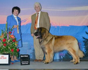 CKC Group placing Leonbergers — Leonberger Club of Canada